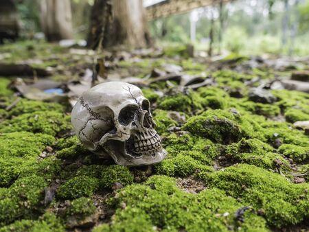 human photography: skull or skeleton human photography Stock Photo