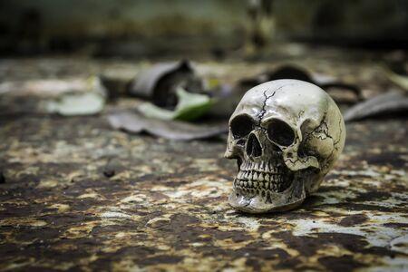 skull or skeleton human photographpy