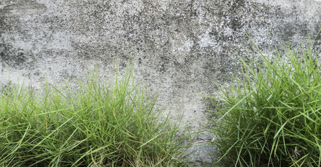 wall background photography Stock Photo