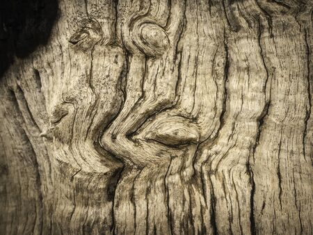 texture of tree photography