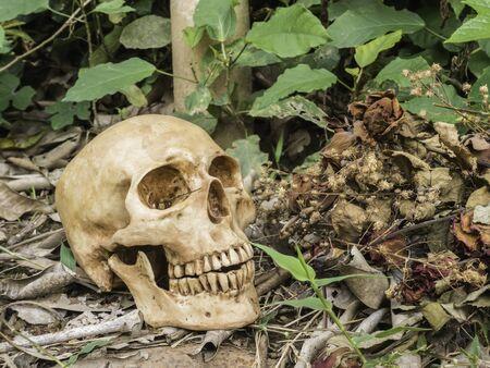 skull or skeleton human photography Stock Photo