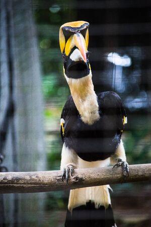 hornbill in cage Stock fotó - 83416375
