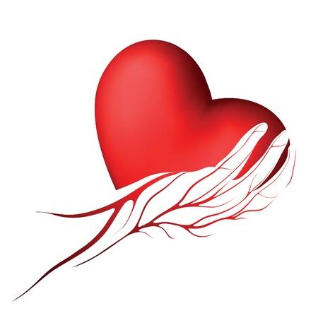 saludable logo: Coraz�n rojo en una mano con venas icono o logotipo