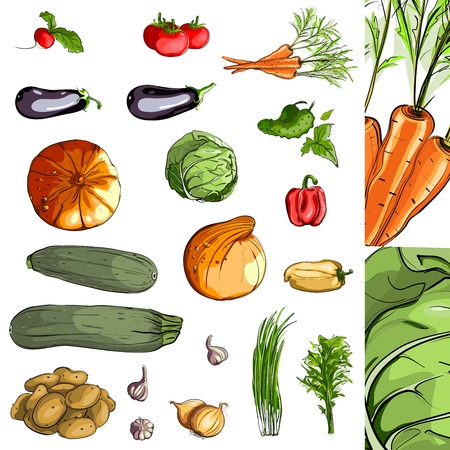 Fresh Vegetables Green Collection. illustration, no effects used. All items are grouped and layered separately. Illustration