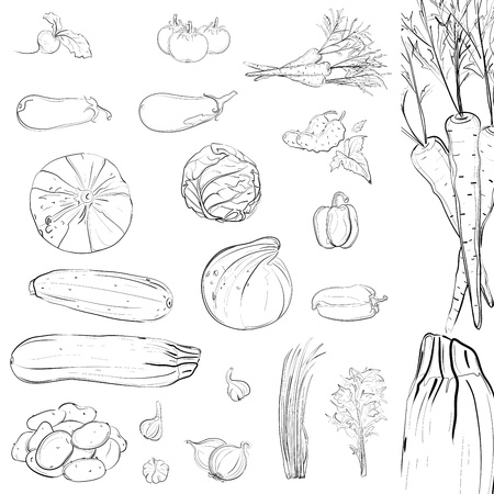 Fresh Vegetables Sketch Collection. illustration, no effects used. All items are grouped and layered separately. No filling color, use them on any background. Vector