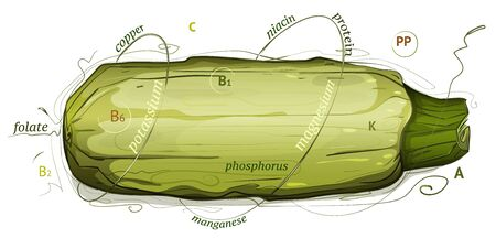 vegetable marrow: Vegetable Marrow Vitamins and Minerals Illustration. marrow nutrition illustration. Sketchy style.