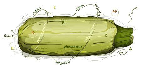 médula: Vitaminas Vegetales de médula e Ilustración minerales. médula ilustración nutrición. Sketchy estilo. Vectores