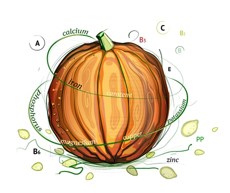 informative: Pumpkin and Seeds Vitamins Illustration. pumpkin nutrition informative illustration. Sketchy style.