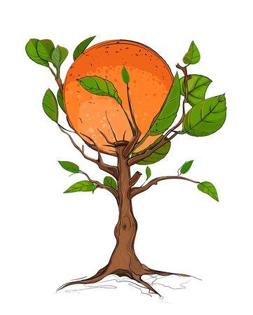 citrus tree: Orange Tree  Illustration