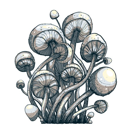 toxic mushroom: Cramped Toadstool Mushrooms Composition  Vector illustration  Fungus growing  Illustration