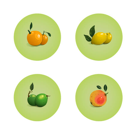 Orange Grapefruit Lime Lemon Citrus Fruits Set  Vector layered fruit illustration  Still life icons set  Vector