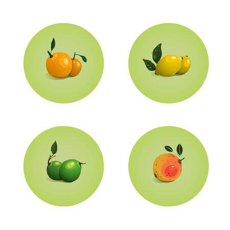 Orange Grapefruit Lime Lemon Citrus Fruits Set  Vector layered fruit illustration  Still life icons set Stock Vector - 22735366