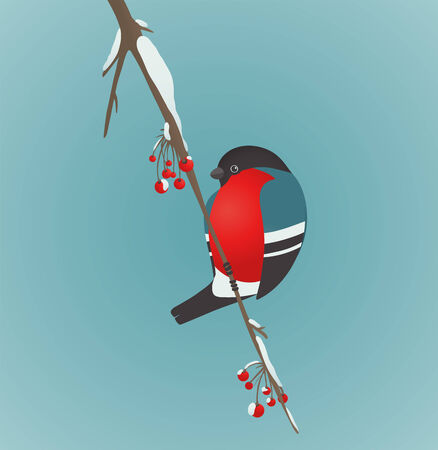 blue berry: Bullfinch Sitting on Ashberry Twig  Bird illustration with berries  Vector EPS8 drawing  Illustration