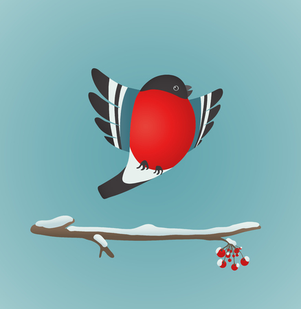 Bullfinch Flying and Ashberry Twig  Bird illustration with berries  Vector EPS8 drawing  Vector