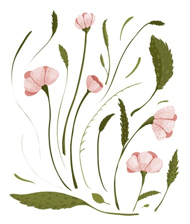 Spring Flowers Collection  A set of delicate flowers  Vector illustration EPS8  Illustration