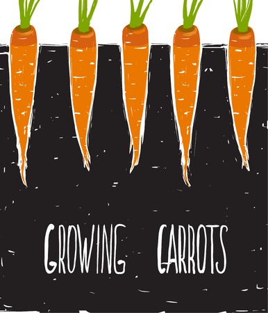 scratchy: Growing Carrots Scratchy Drawing and Lettering  Bed of carrots scribble illustration  Vector EPS8