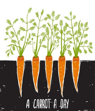 illustration of food: Creciendo Zanahorias Dibujo a mano alzada y letras de cama de zanahorias garabatear ilustraci�n vectorial EPS8