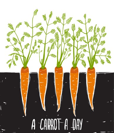 row: Growing Carrots Freehand Drawing and Lettering  Bed of carrots scribble illustration  Vector EPS8  Illustration