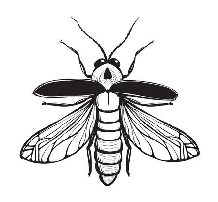 ホタル昆虫黒インク描画バグのツチボタルや雷のバグの図