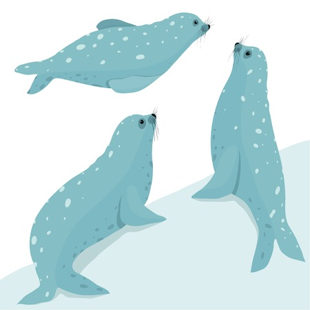 Fur Seal Wildlife Illustration Set  Three seals in different poses   Stock Vector - 29056419