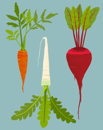 beet root: Growing Root Vegetables Set with Green Leafy Top Illustration