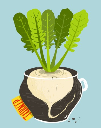 rutabaga: Growing Russian Turnip with Green Leaves in Pot