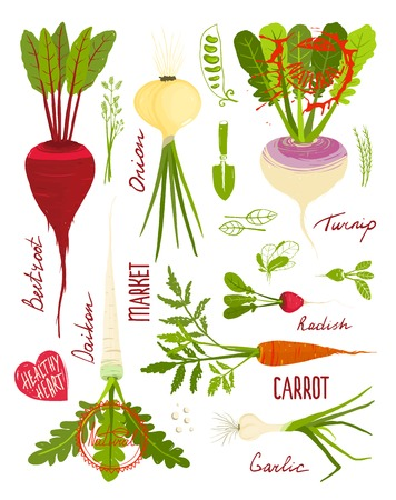 root vegetables: Root Vegetables with Greens Signs and Symbols Design Collection.