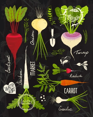 cartoon carrot: Root Vegetables with Leafy Tops Set for Design on Blackboard.