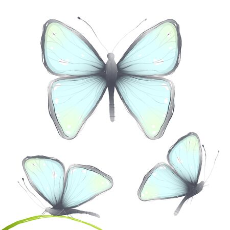 aspects: Three Hand Drawn Delicate Blue Butterflies . Blue butterflies flying side and front view. Vector illustration EPS10. Illustration