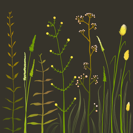 grass field: Wild Field Flowers and Grass on Black. Rustic colorful meadow growth illustration set. Vector