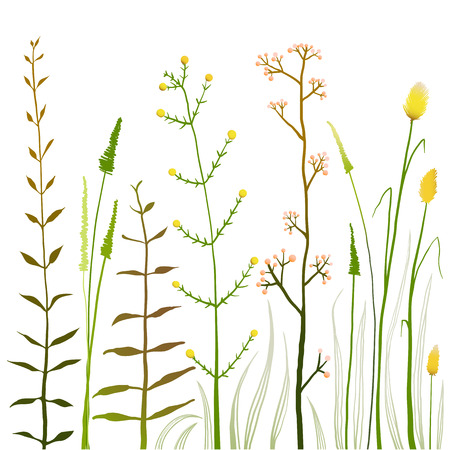 Wild Field Flowers and Grass on White Collection. Rustic colorful meadow growth illustration set. Vector