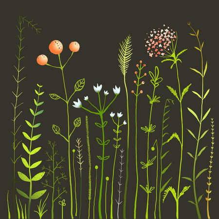 Wild Flowers and Grass Field on Black Collection. Rustic colorful meadow growth illustration set. Vector