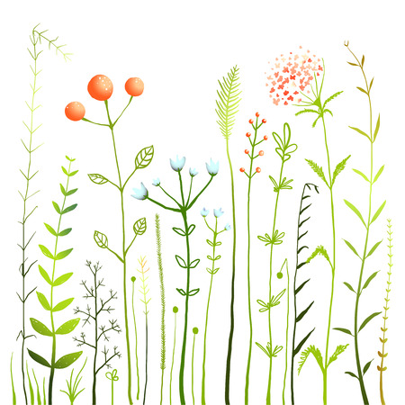 Flowers and Grass on White Grassland Collection. Rustic colorful meadow growth illustration set. Vector