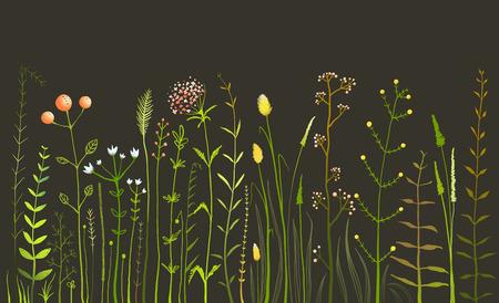 champ de fleurs: Sauvages champ de fleurs et de l'herbe sur le noir Illustration