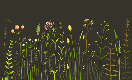 wild grass: Wild Field Flowers and Grass on Black Illustration