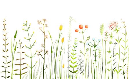 champ de fleurs: Sauvages champ de fleurs et de l'herbe sur la collecte Blanc