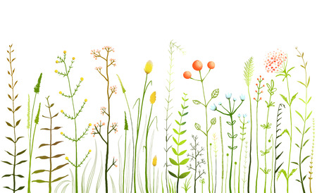 Wild Field Flowers and Grass on White Collection Stock Vector - 40043061