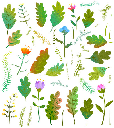Summer or fall forest items collection. Vector illustration. Stock Photo
