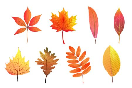 Autumn foliage hand drawn colorful leaves flat vector illustrations set