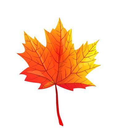 Ilustración de vector plano realista de hoja de otoño de arce Ilustración de vector