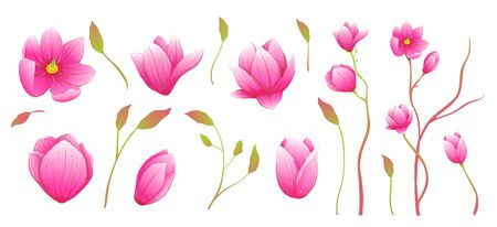 Elegant luxury magnolia branches clip art for creating compositions. Watercolor style hand drawn collection.