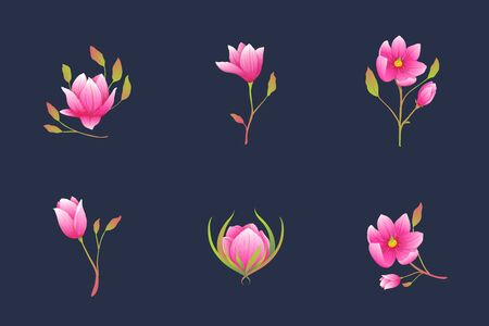 Roses or magnolia flowers elegant tiny bouquets, detailed blooming floral clip art. Ilustrace