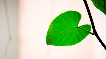 prespective: Other side of the leaves  Stock Photo