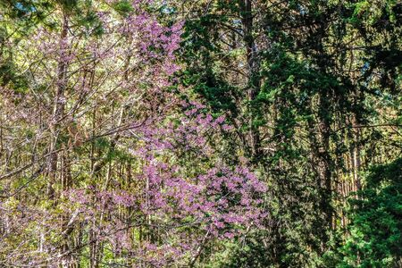 bunch of pink flowers with natural forest background 免版税图像