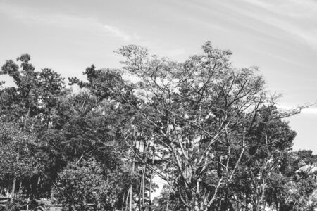black and white nature forest and sun bright with blue sky background 免版税图像