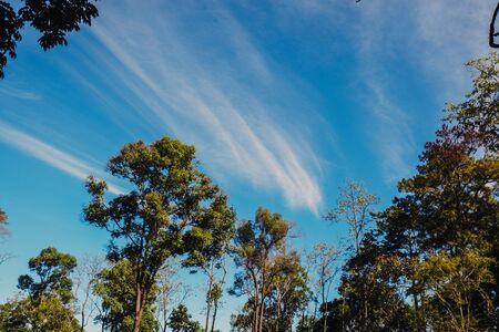 nature forest and sun bright with blue sky background 免版税图像