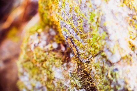 worm climbing on the rock Reklamní fotografie