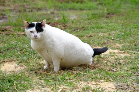 white cat stare at camera 免版税图像