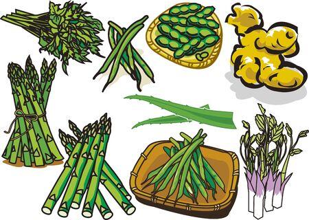Vegetable1 Illustration