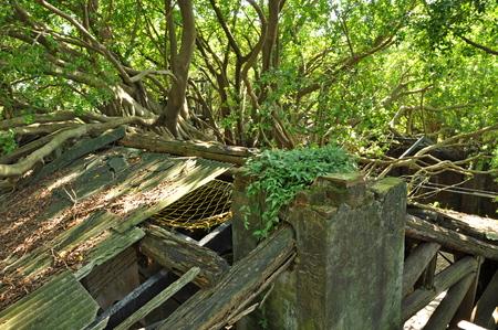 Anping 나무 집